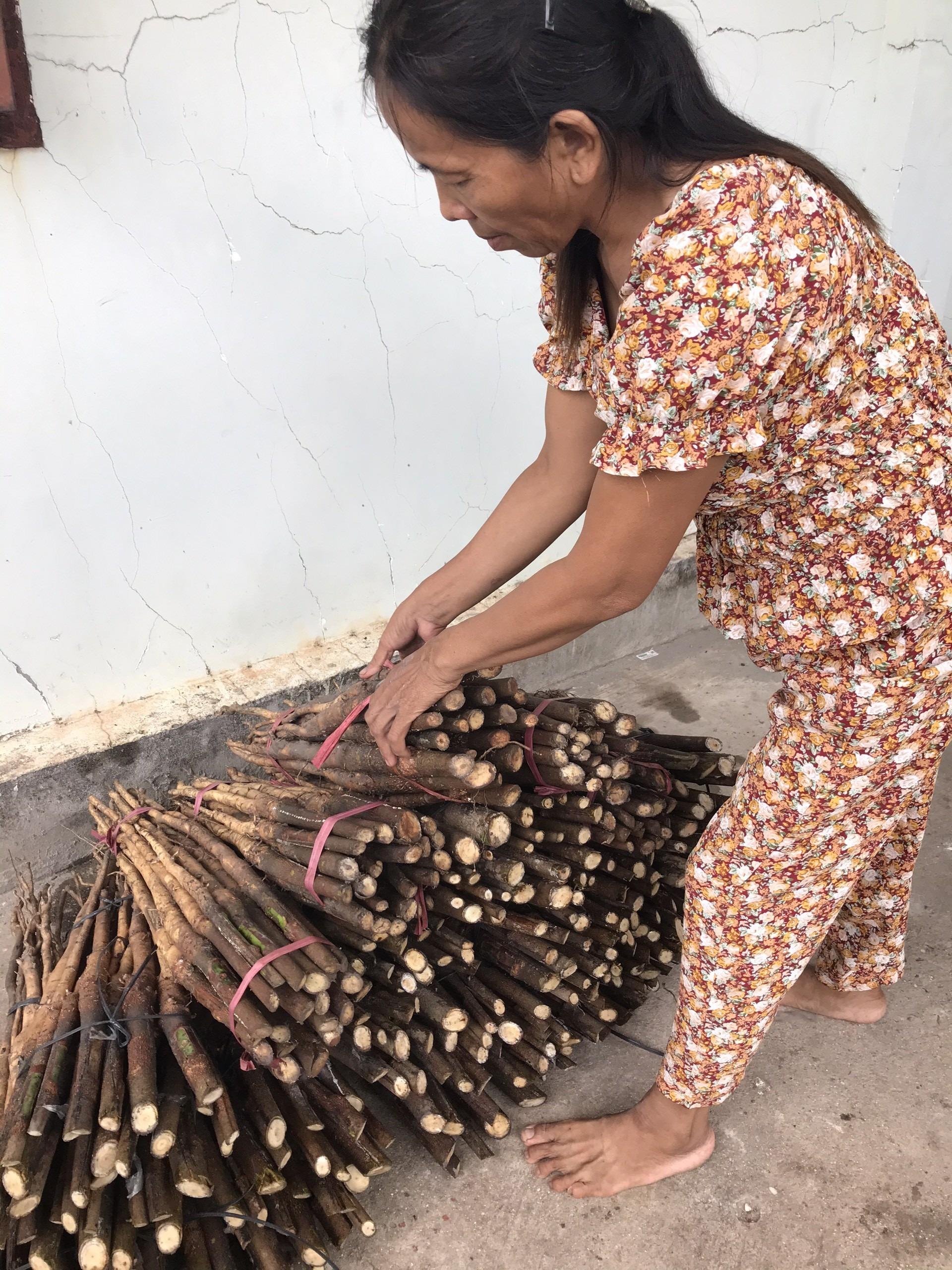 Chuẩn bị hơn 500 stump trần giao cho khách ở Lâm Đồng