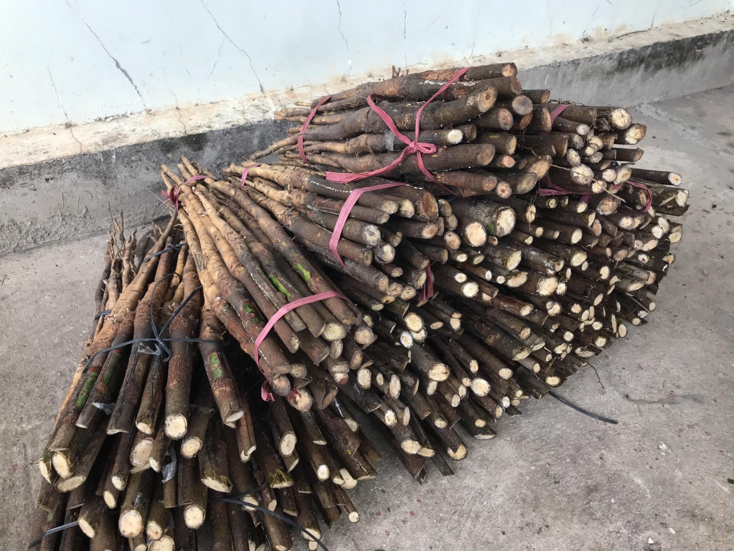Stump trần giao cho khách ở Lâm Đồng